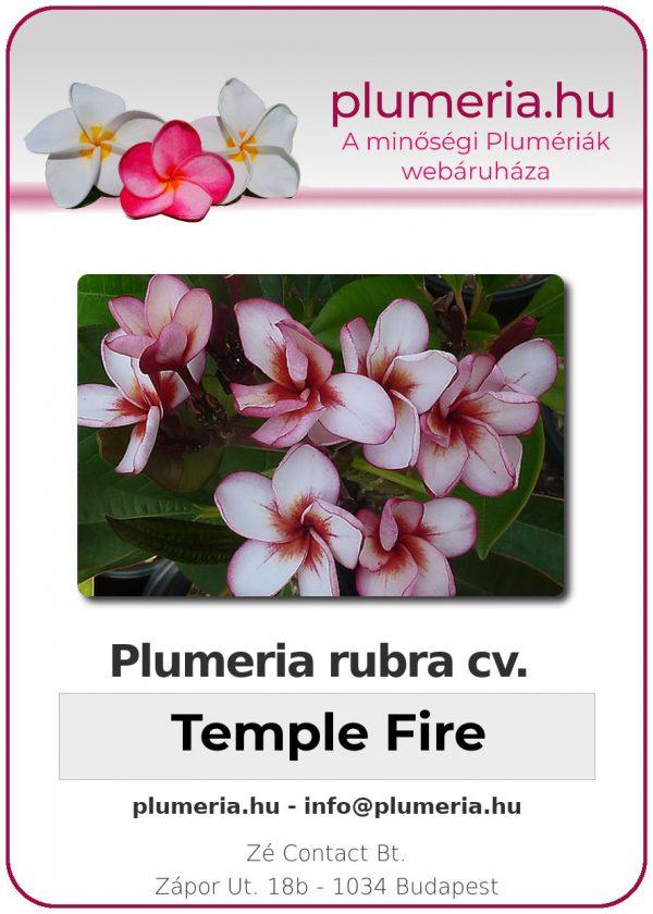 "Plumeria rubra ""Temple Fire"""
