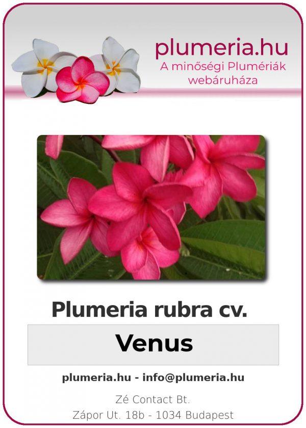 "Plumeria rubra ""Venus"""