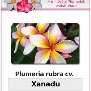 "Plumeria rubra ""Xanadu"""