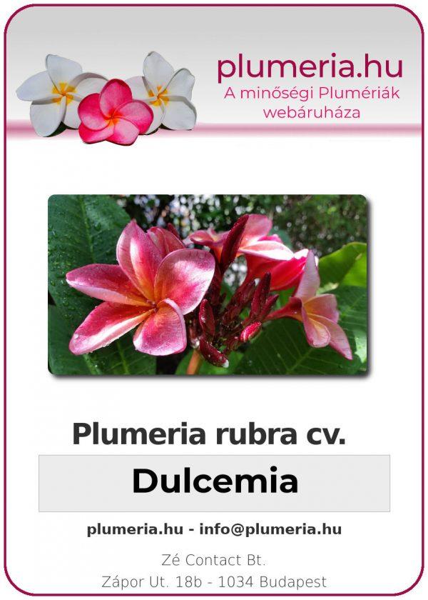 "Plumeria rubra ""Dulcemia"""