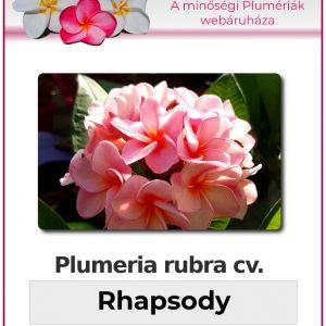 "Plumeria rubra ""Rhapsody"""