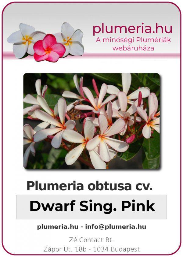 """Plumeria obtusa """"Dwarf Singapore White"""""""