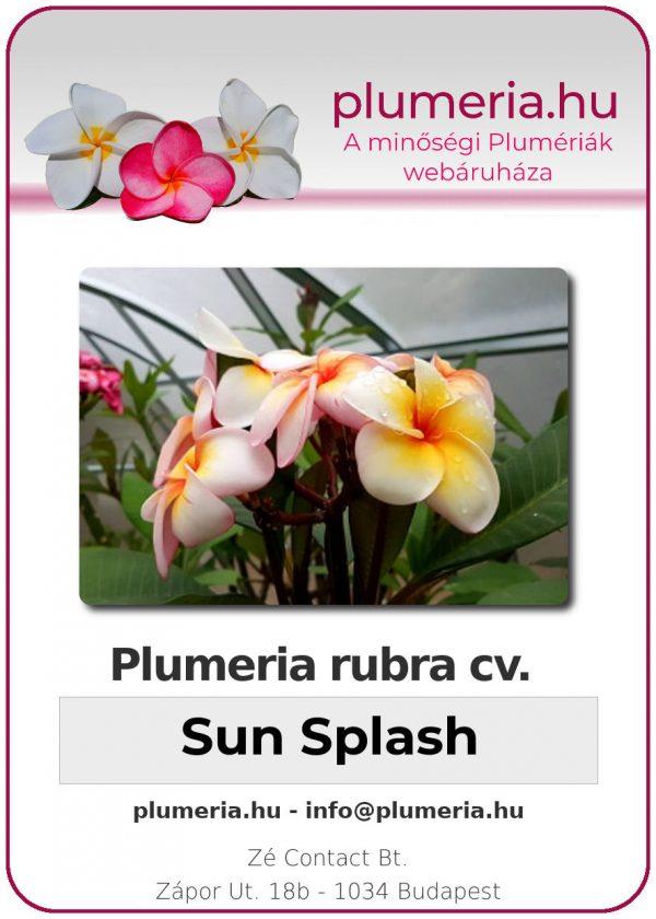 "Plumeria rubra ""Sun Splash"""