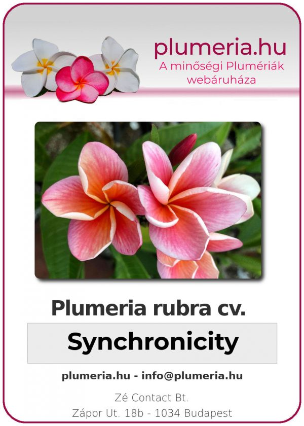 "Plumeria rubra ""Synchronicity"""