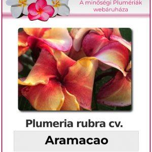 "Plumeria rubra ""Aramacao"""