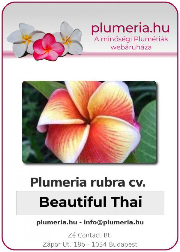 "Plumeria rubra ""Beautiful Thai"""