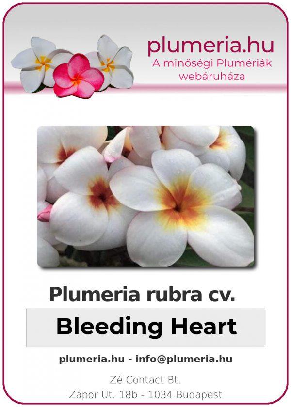 "Plumeria rubra ""Bleeding Heart"""