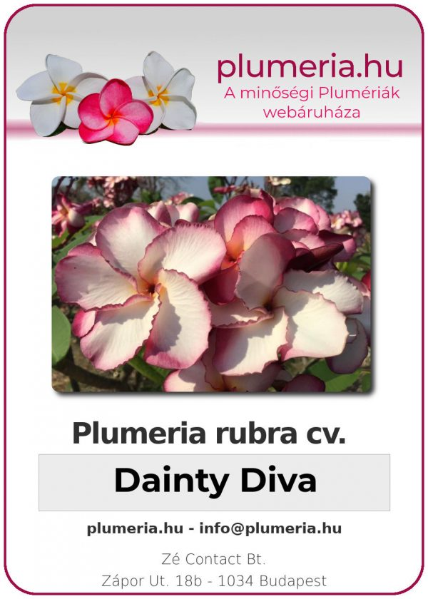 "Plumeria rubra ""Dainty Diva"""