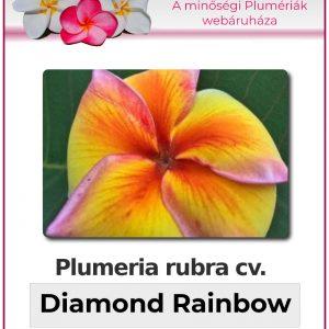 "Plumeria rubra ""Diamond Rainbow"""