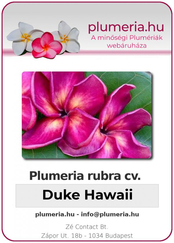 "Plumeria rubra ""Duke Hawaii"""