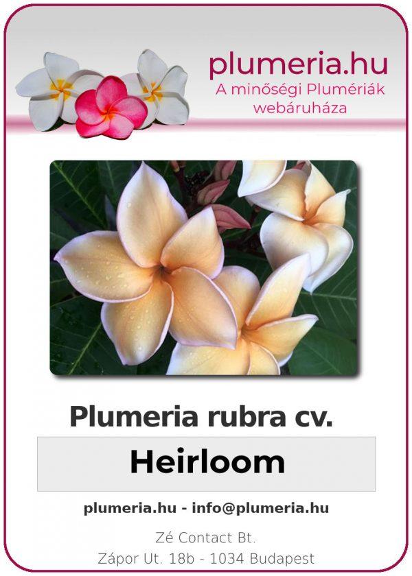 """Plumeria rubra """"Heirloom"""""""
