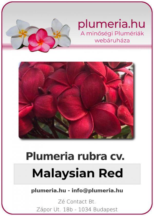"""Plumeria rubra """"Malaysian Red"""""""