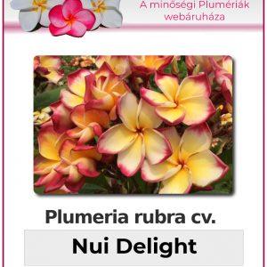 "Plumeria rubra ""Nui Delight"""