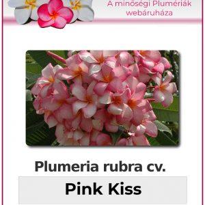 """Plumeria rubra """"Pink Kiss"""""""