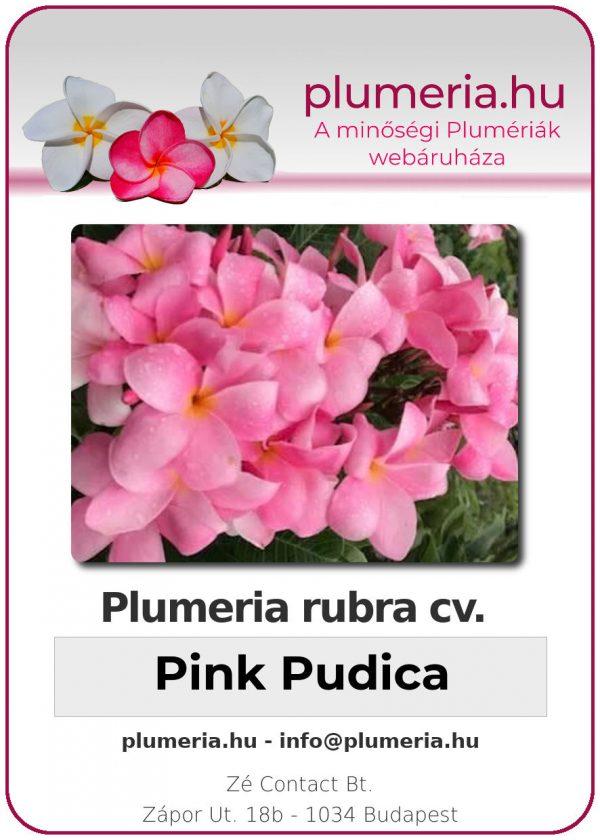 "Plumeria rubra ""Pink Pudica"""