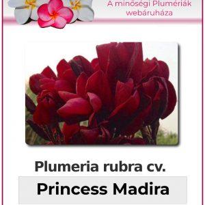 "Plumeria rubra ""Princess Madira"""