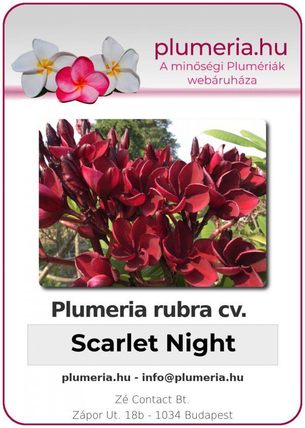"Plumeria rubra ""Scarlet Night"""