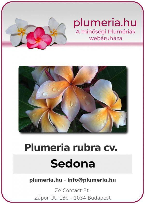 "Plumeria rubra ""Sedona"""
