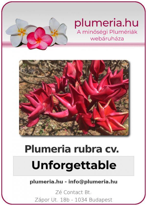 """Plumeria rubra """"Unforgettable"""""""
