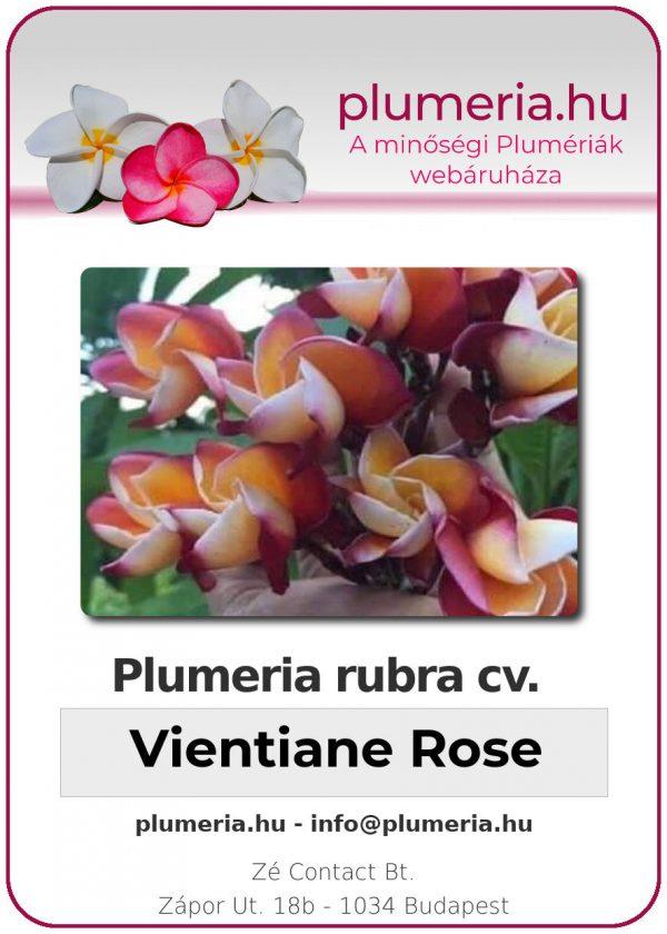 """Plumeria rubra """"Vientiane Rose"""""""