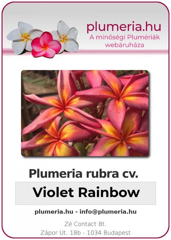 """Plumeria rubra """"Violet Rainbow"""""""