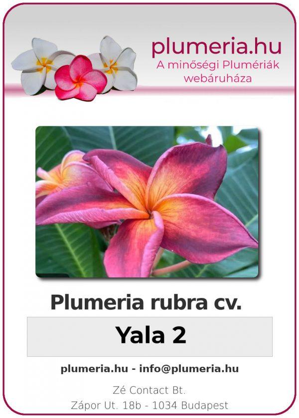"Plumeria rubra ""Yala2"""
