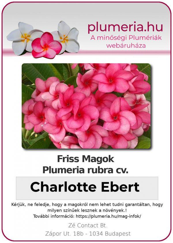 """Plumeria rubra """"Charlotte Ebert"""""""