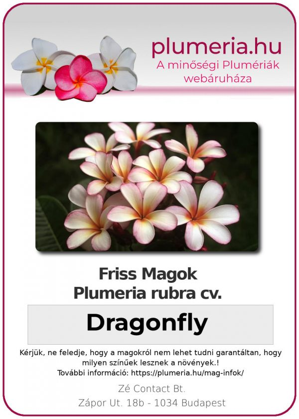 "Plumeria rubra ""Dragonfly"""