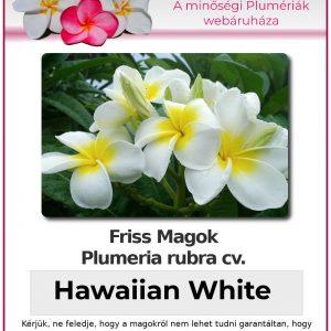 "Plumeria rubra ""Hawaiian White"""