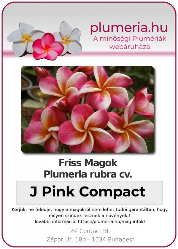 "Plumeria rubra ""J Pink Compact"""