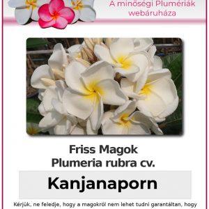 "Plumeria rubra ""Kanjanaporn"""
