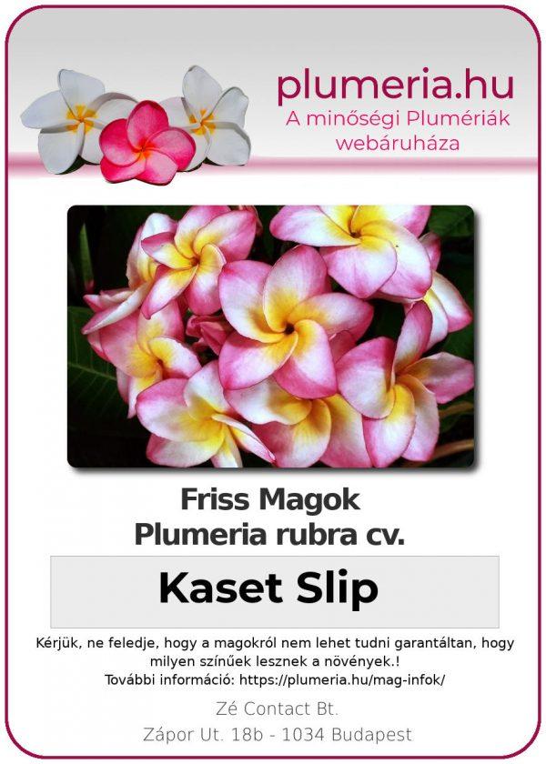 """Plumeria rubra """"Kaset Slip"""""""