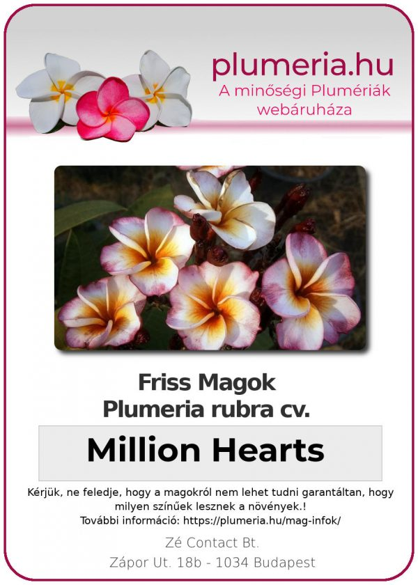 """Plumeria rubra """"Million Hearts"""""""