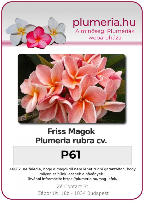 """Plumeria rubra """"P61"""""""