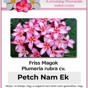 """Plumeria rubra """"Petch Nam Ek"""""""