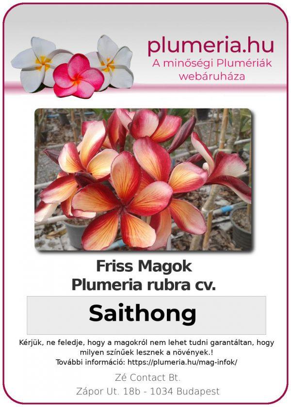 """Plumeria rubra """"Saithong"""""""