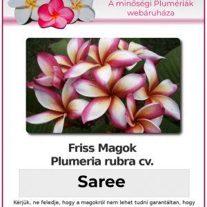 """Plumeria rubra """"Saree"""""""