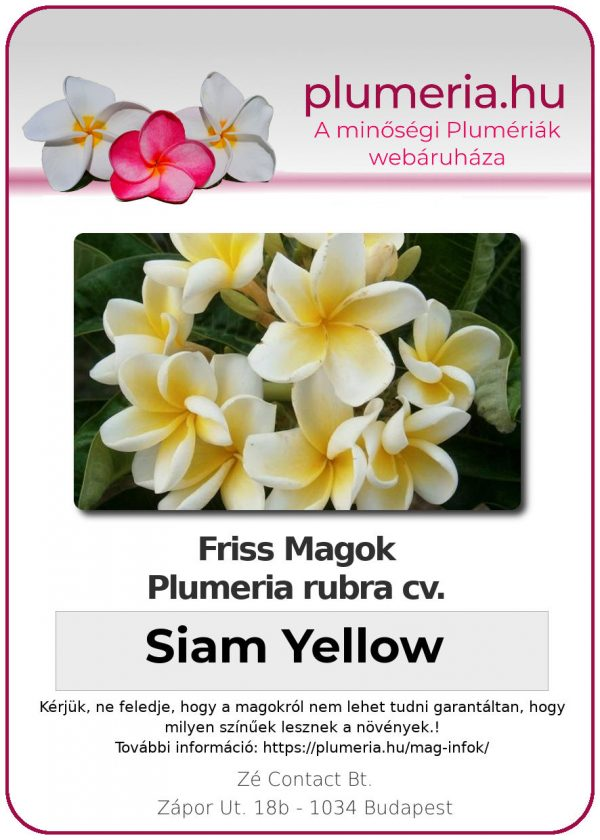 "Plumeria rubra ""Siam Yellow"""