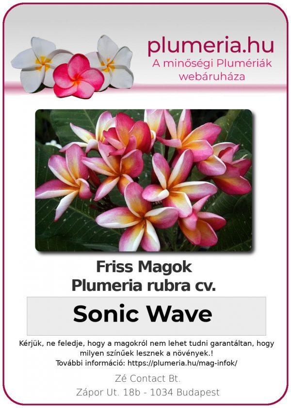 "Plumeria rubra ""Sonic Wave"""