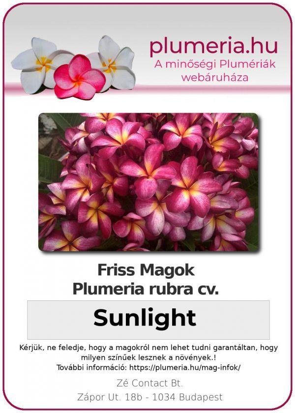 "Plumeria rubra ""Sunlight"""