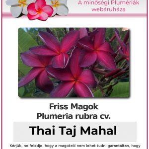 """Plumeria rubra """"Thai Taj Mahal"""""""