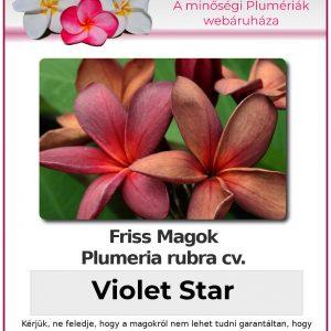 "Plumeria rubra ""Violet Star"""